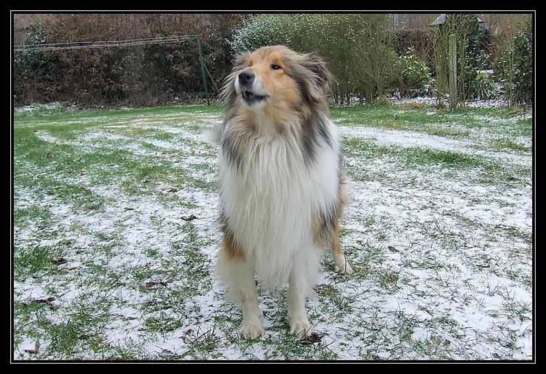 la première neige de Chyara LapremiereneigedeChyara3.2.2009.10.48.36
