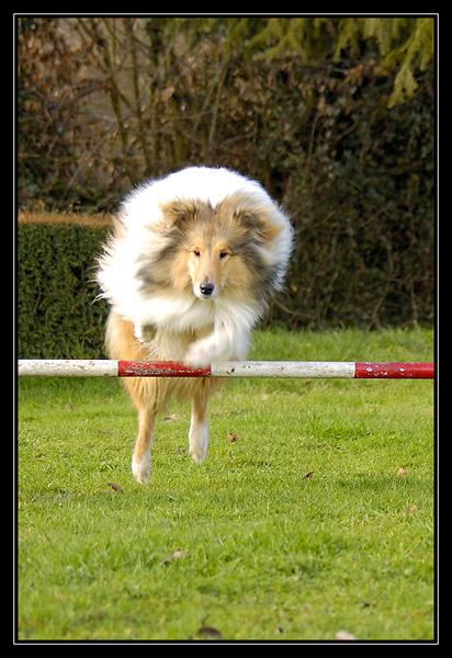 les photos de mes poilus LescalinsdeChyaraetOslo10.2.2008.12.6.26